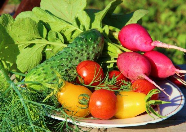 Диетологи раскрыли главные опасности вегетарианства