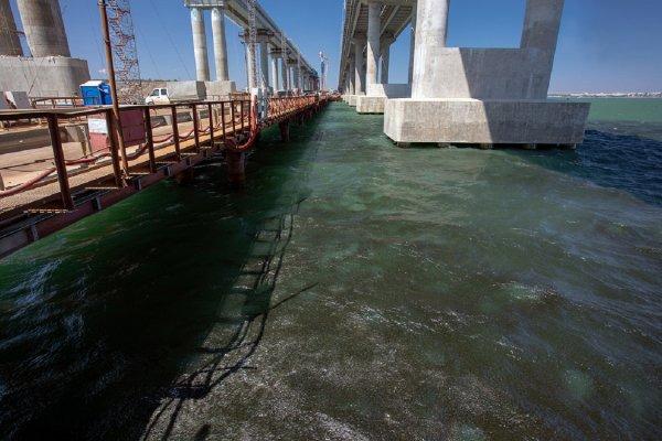 Крымский мост защищает мигрирующих рыб