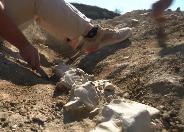 У Крымского моста археологи нашли останки вымершего предка кита
