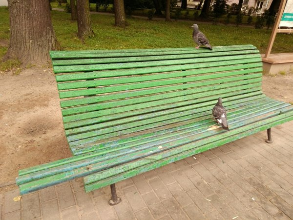 В Великих Луках появилась скамейка с удивительным дизайном