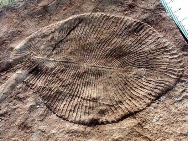 Российские учёные нашли останки животного, жившего на Земле более 550 млн лет назад