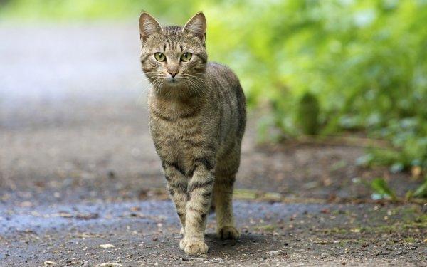 В Ростове придумали для котов эксклюзивный метод попасть в квартиру