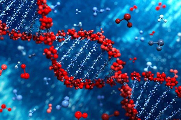 Учёные обнаружили ген, виновный в развитии энцефалопатии и деменции