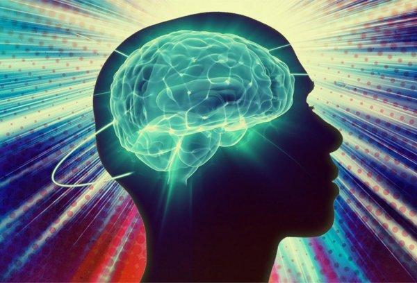 Нейрофизиологи изучили деятельность человеческого мозга во время принятия решений