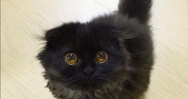 «Продавец-консультант»: Ростовский кот потряс всех покупателей