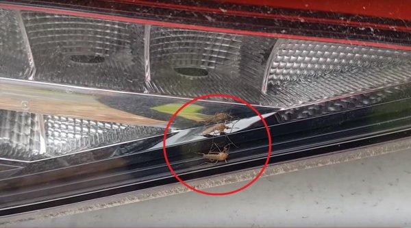 «Хоть дихлофосом обрабатывай!»: Владельцы Skoda жалуются на комаров-паразитов в фонарях