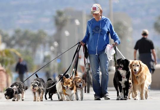 Тюменцы разработали первый в стране сервис по выгулу собак