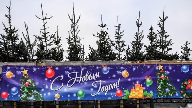 Стало известно, когда россияне выбрасывают новогоднюю елку