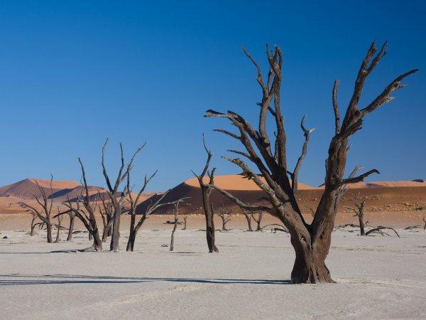 Учёные: Глобальное потепление приводит к вымиранию растений