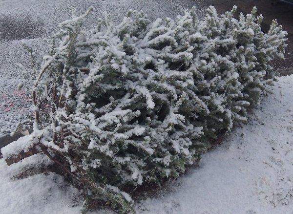 Воронежцы вычислили первого «слабака», распрощавшегося с елкой