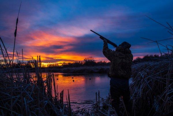 В Ростовской области вводят запрет на охоту вдоль границы с Украиной