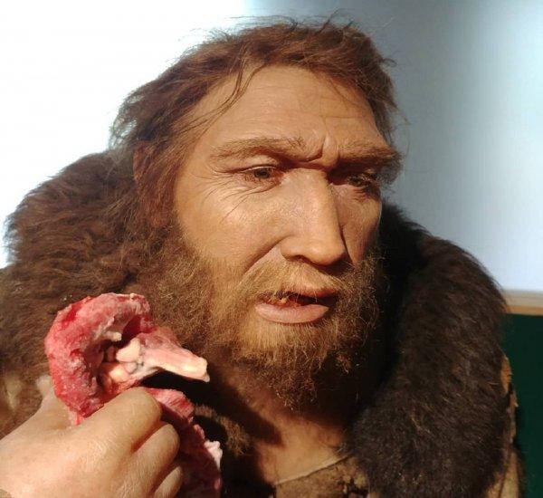 Ученые: Нейросеть нашла третьего предка человека