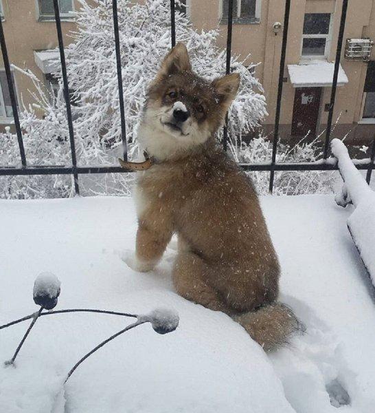 Пляшущий в центре Воронежа пёс-кенгуру рассмешил местных жителей