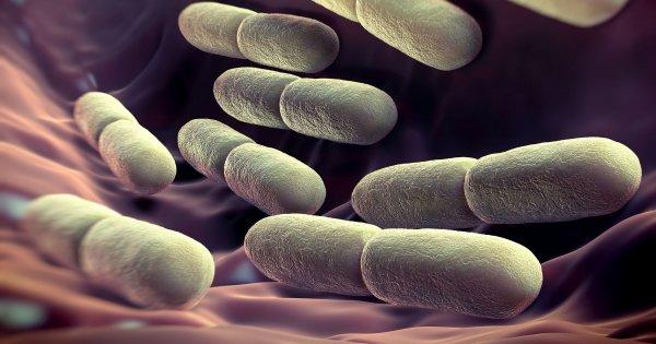 Ученые выявили в кишечнике человека около 2 тысяч неизведанных микробов