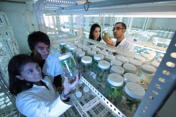 Могут стать гениями: Близнецам из Китая нежданно улучшили работу мозга, изменяя гены