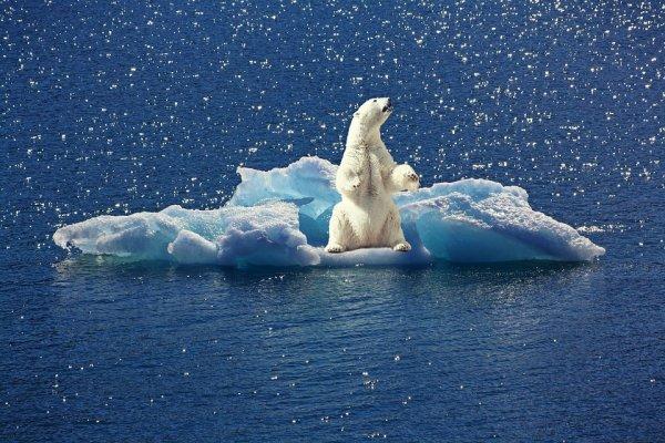 Аномальные зимние дожди размывают Гренландию