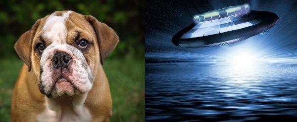 Планета животных: Инопланетяне устанавливают контакт с собаками, чтобы уничтожить людей
