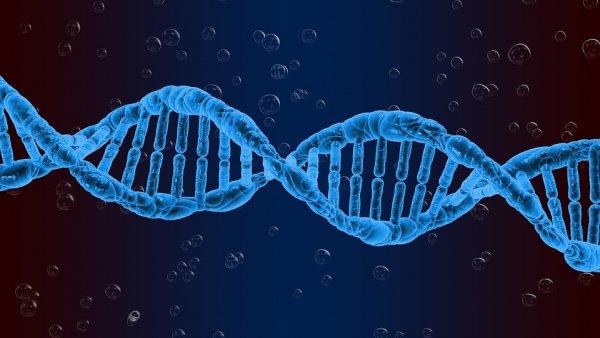 Ученые установили влияние бедности на человеческую ДНК