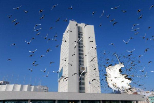 «Всё в помёте? Богатым будешь!»: Администрация Приморского края поддалась атаке голубей