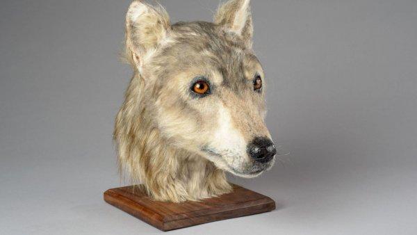 Учёные воссоздали морду 4 500-летней собаки