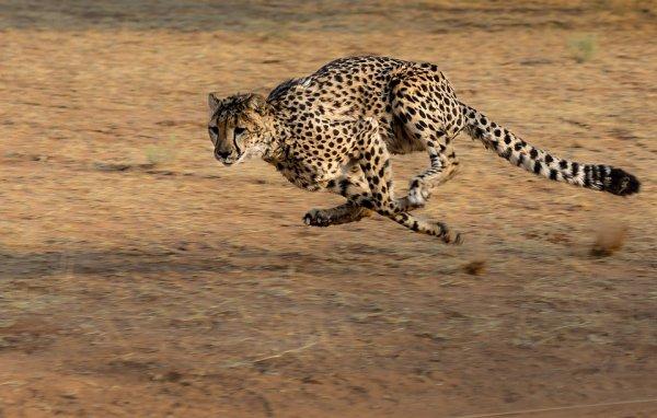 Размер тела влияет на скорость животных - учёные