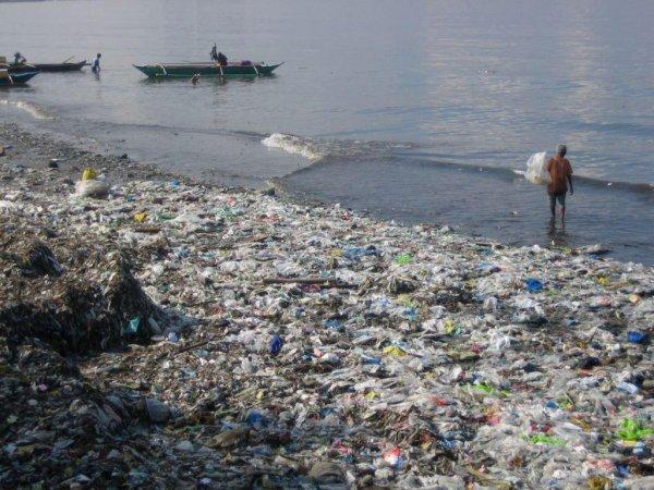 Ядовитый апокалипсис: Пожирающая пластиковые отходы моль может уничтожить человечество