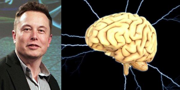 Хочет стать властелином мира? Стартап Илона Маска научился вживлять микрочипы в мозг