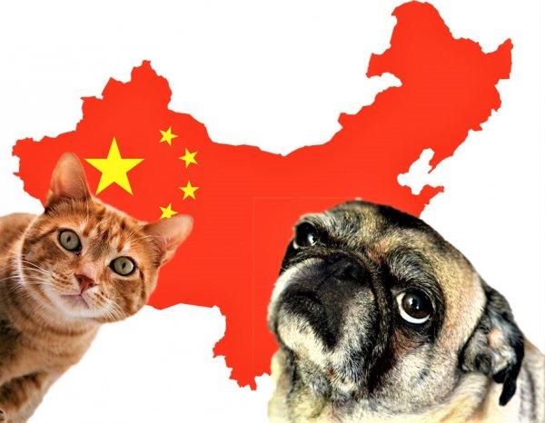 Не на мясо, а для души. Китайские туристы массово вывозят из России кошек и собак в КНР
