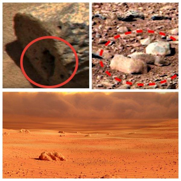 Зоопарк с инопланетными животными? На Марсе нашли дупло выжившей белки