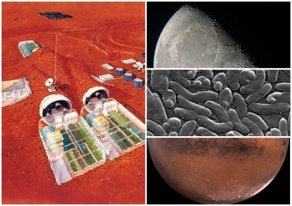Уфологи нашли инопланетные фермы на Марсе и Луне – В Сеть попало фото гигантских космических грибов NASA