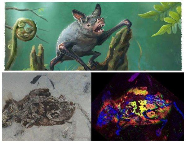 Коричневый мех и белый животик: Учёные выяснили, как выглядели мыши 3 млн лет назад