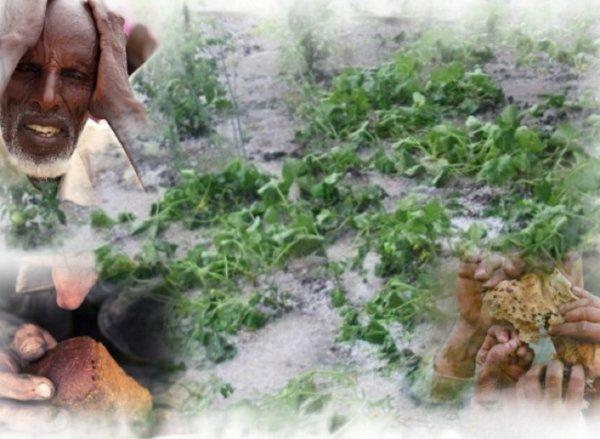 «Голодные игры» начнутся в Европе: Ледяной Апокалипсис уничтожит урожай
