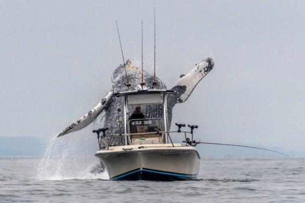 Огромный кит напал на рыбаков: Гигантские животные могут уничтожить человечество
