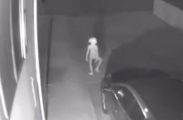 Добби свободен: Карликовый пришелец разгуливает по ночному городу