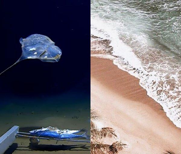 Зонд инопланетян? Странное существо сняли на камеру в самой глубокой части Индийского океана