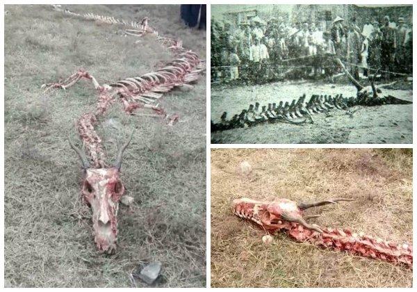 ПВО России сбило дракона с Нибиру - Под Волгоградом нашли скелет 20-метрового ящера