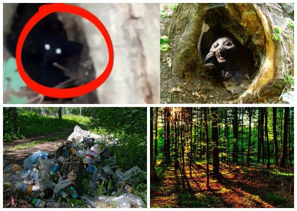 Власть не может – Нибиру поможет: Пришельцы-гастарбайтеры занялись облагораживанием московских лесов