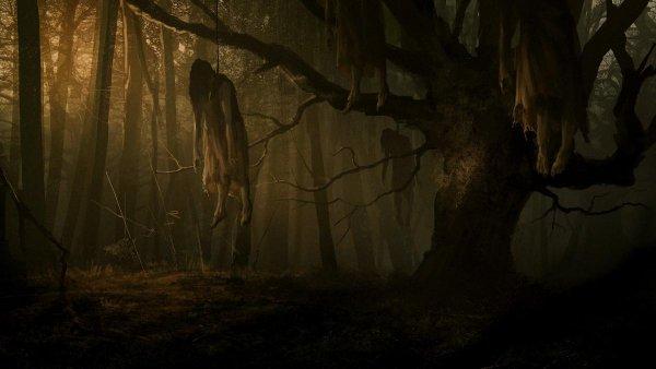 Дерево-душегуб: У знаменитого «исполнителя желаний» пропадают люди