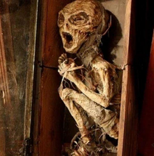 В Иркутске нашли труп пришельца: Пенсионерка 60 лет хранила на чердаке гуманоида с Нибиру