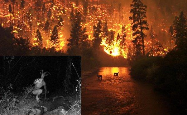 В Сибири открылся портал в Ад! Козлоголовый предвестник Апокалипсиса убил охотника в лесу