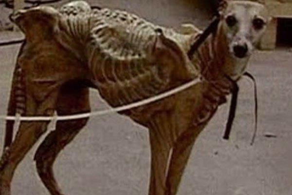Пришельцы прячутся в собаках! «Подменённый» домашний питомец может быть смертельно опасен для хозяев - эксперт
