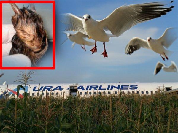 Птицы Апокалипсиса: Рейс U6178 «Жуковский-Симферополь» атаковали мутанты с Нибиру