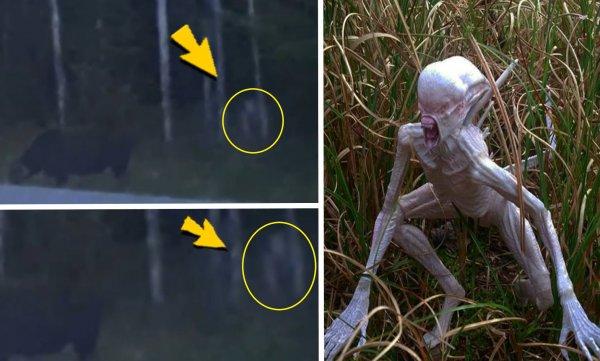 Лесной ждун с Нибиру: Голодный мутант «зомбирует» животных под Воронежем