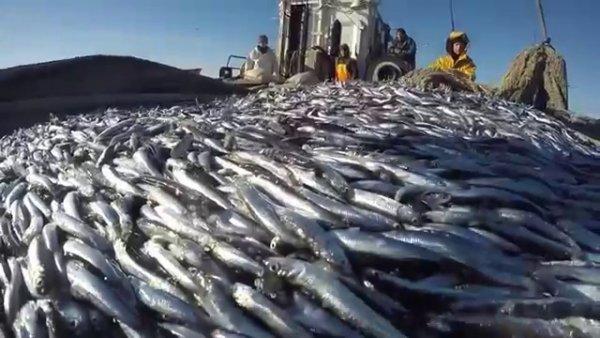 Плевок в лицо рыбакам: В Новороссийске неизвестные «оккупировали» рыбацкую бухту ради незаконной стройки