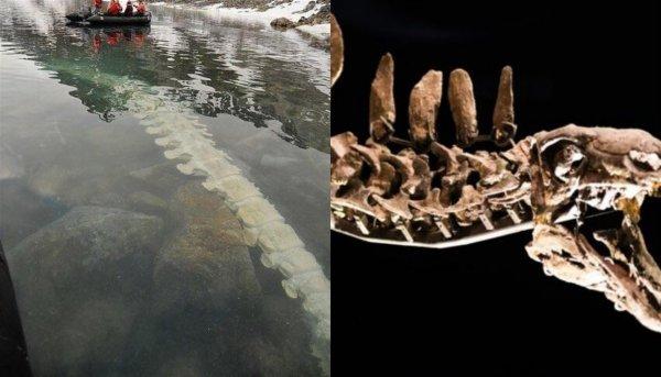 Курилы «выплюнули» труп дракона: Скелет существа с Нибиру всплыл после землетрясения