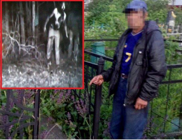 Армия зомби-зверей терроризирует россиян: В Сибири нашествие пьяных енотов