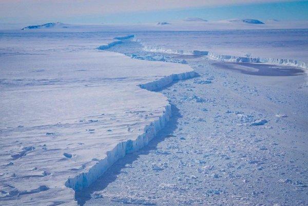 Лунный полип: В леднике обнаружили хищника, пожирающего морской кислород