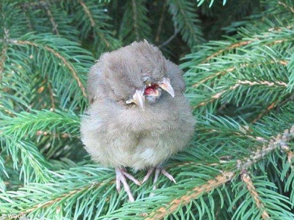 Малыш-птицерыл: В ботаническом саду Подмосковья обнаружили мутанта из Чернобыля