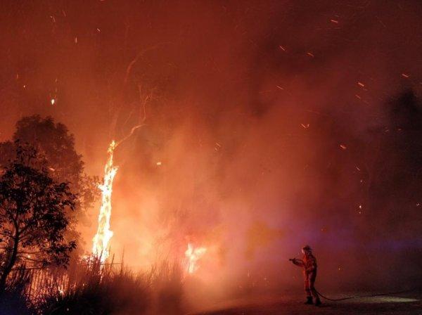 Поджигатель с Нибиру: Феникс Апокалипсиса устроил массовые пожары в Австралии