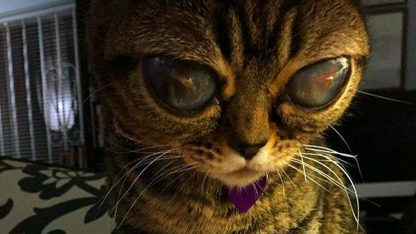Нибиру отравила кошек: Жертвами милых любимцев стали три женщины